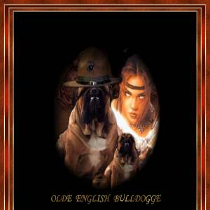 Angeleyes Ole English Bulldog