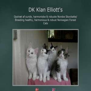 DK Klan Elliotts Norske Skovkatte