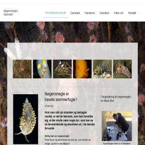 Nudibranchia - Nøgensnegle i Danmark