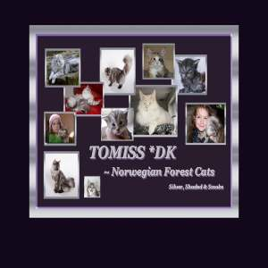 Tomiss DK